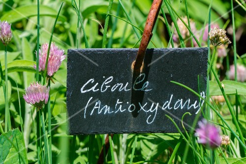 Fresh chives in the garden with sign (antioxidant)