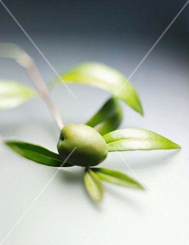 A green olive on the twig
