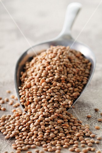 Lentils on a scoop