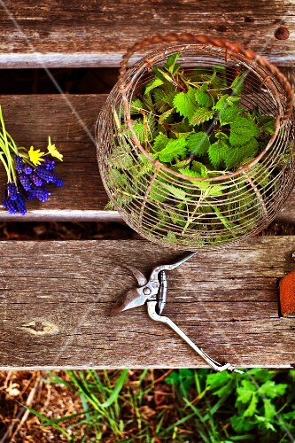 A wire basket with stinging nettle leaves on a wooden bench