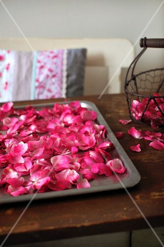 Rose petals on a baking sheet for drying
