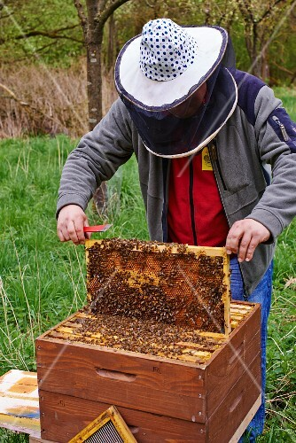 A bee-keeper wearing a bee-keeper's hat checking the honeycombs