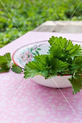 Freshly cut nettle tops in an old enamel bowl on a garden table