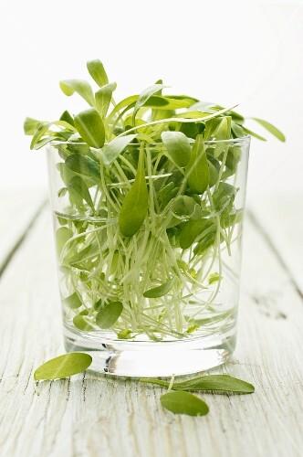Fresh watercress in a glass