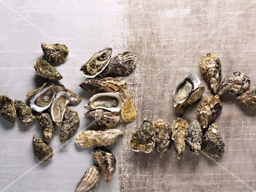 Assorted types of oyster (view from above)