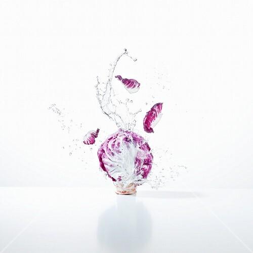 Radicchio with a splash of water