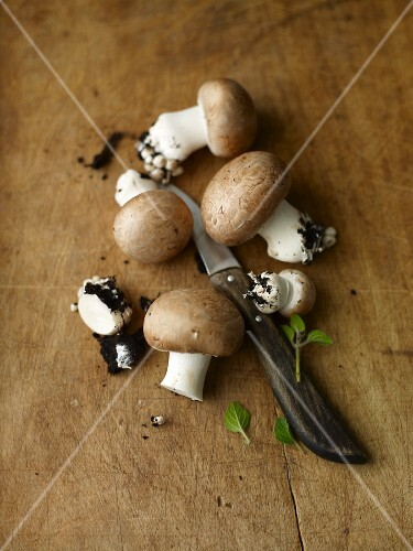 Fresh brown mushrooms with soil and a knife on a wooden surface
