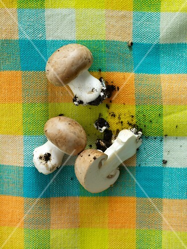 Fresh brown mushrooms with soil on a checked cloth