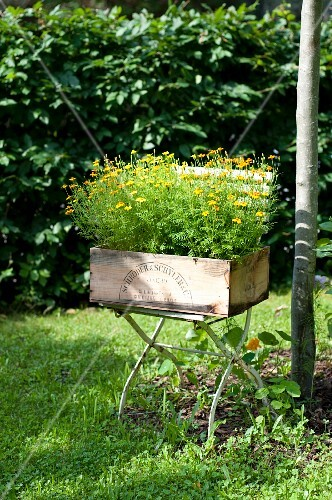 Flowers growing in a crate on a garden chair