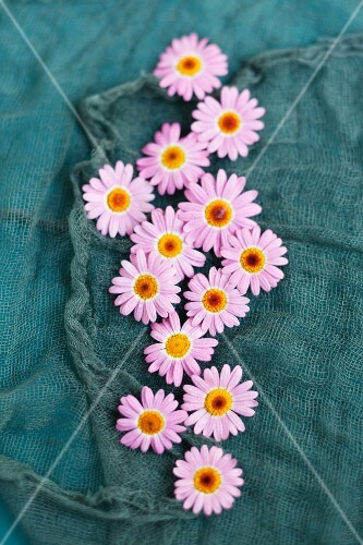 Edible flowers on turquoise fabric