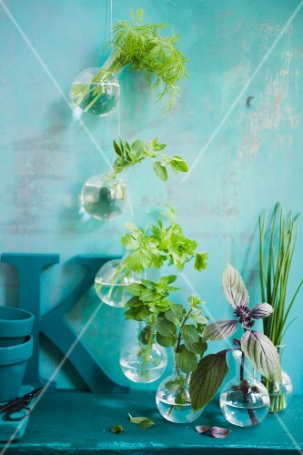 Fresh herbs in small balloon jars