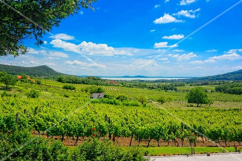 A panoramic view over the wine-growing region of Badacsony, Lake Balaton, Hungary