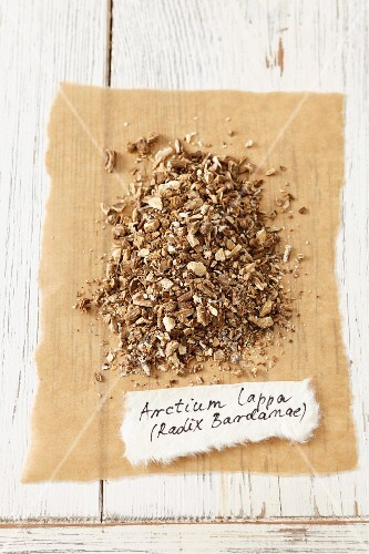 Dried root of the greater burdock (Arctium lappa)