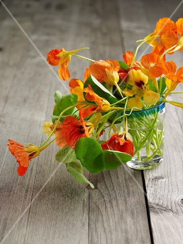 Nasturtium flowers in a glass