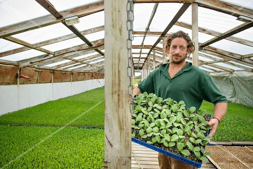 A farmer in a greenhouse holding up a crate of vegetable seedlings