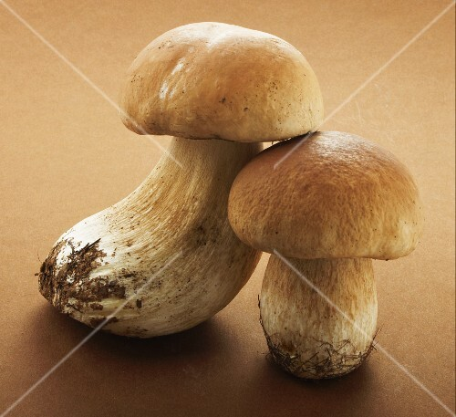 Two ceps