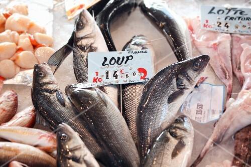 Fresh fish and scallops at the market
