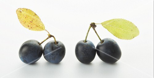 Two pairs of damsons