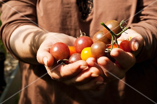 A woman holding cherry tomatoes in her hands
