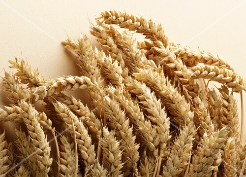 Dried wheat
