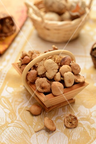 Fresh garlic parachute mushrooms in a wooden basket