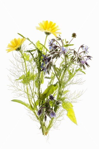Borage, dill and marigolds