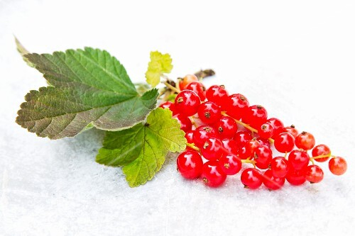 Redcurrents with leaves