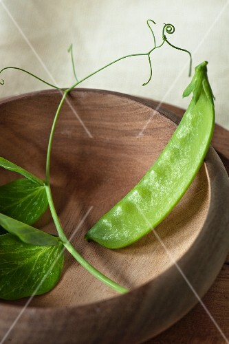 sinle mange tout bean in a wooden bowl with fresh bean leaves