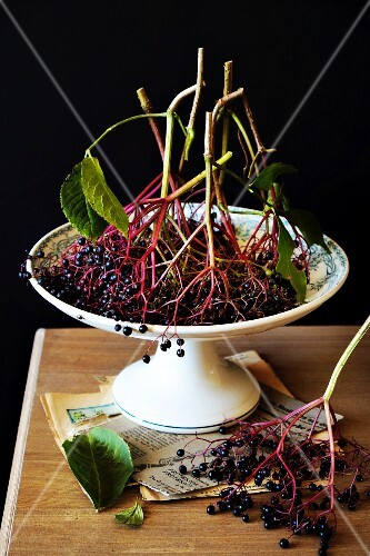 A still life featuring elderberries in a bowl against a black background