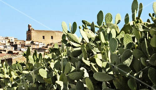 A field of cactus outside a town in Sicily