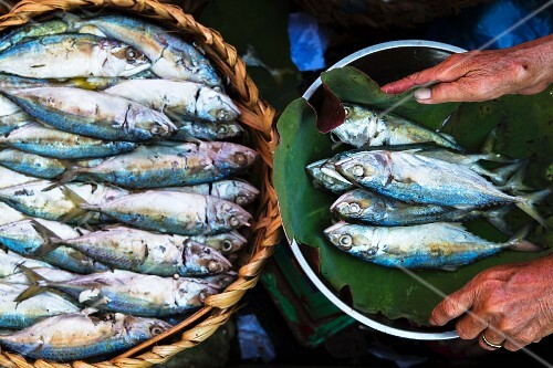 Mackerel at a market in Phnom Penh, Cambodia
