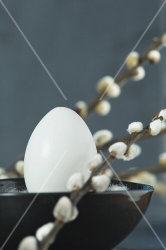 A white egg in a bowl between twigs of pussy willow