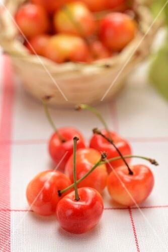 Cherries of the variety 'Napoleon'