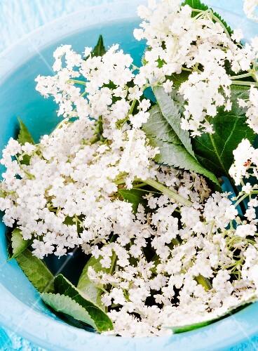 Elderflowers in a blue bowl