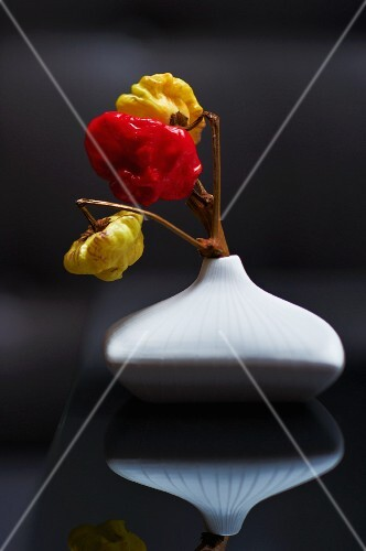 Chillies in a vase