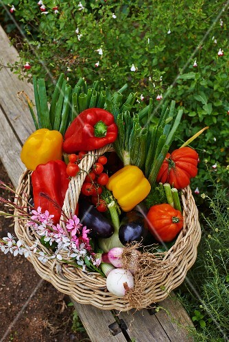 A vegetable basket on a wooden plank in the garden