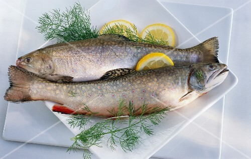 Two chars with lemon slices and dill on a plate