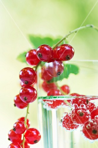 A glass of water with redcurrants (close-up)