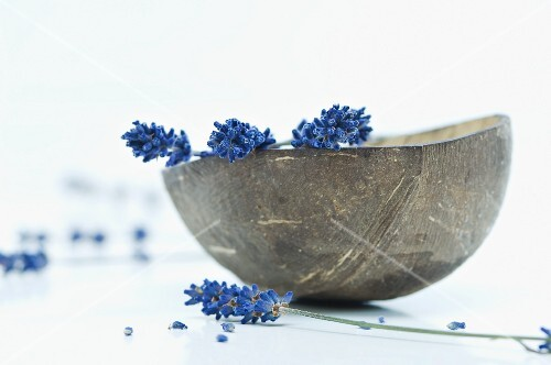 Lavender flowers in a coconut shell
