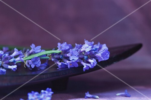 Lavender in a wooden bowl