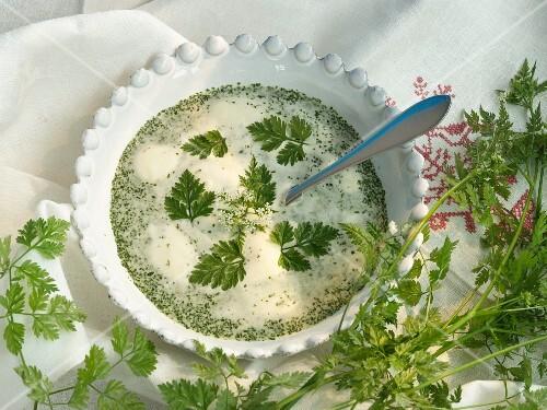 Bowl of chervil soup