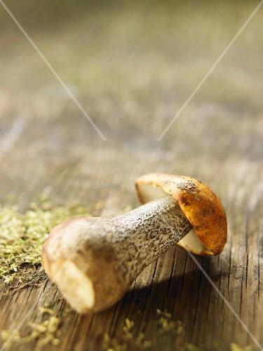 A fresh birch bolete on a wooden surface