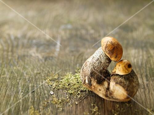 Birch boletes on a wooden surface
