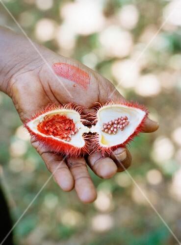 Lipstickfruit