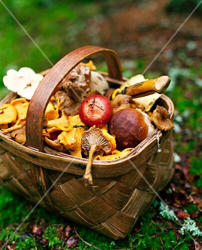Assorted wild mushrooms in a basket, in an autumnal field