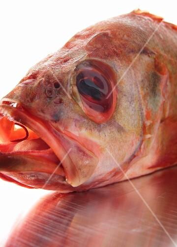 A fish head (close-up)