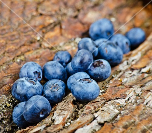 Blueberries on tree bark