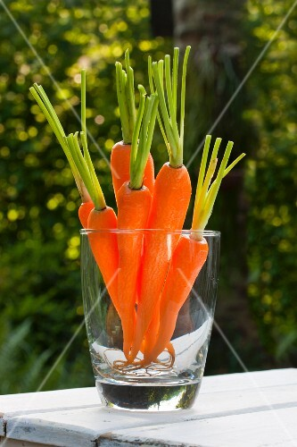Peeled, washed raw carrots (crudités) in a glass on a table outdoors