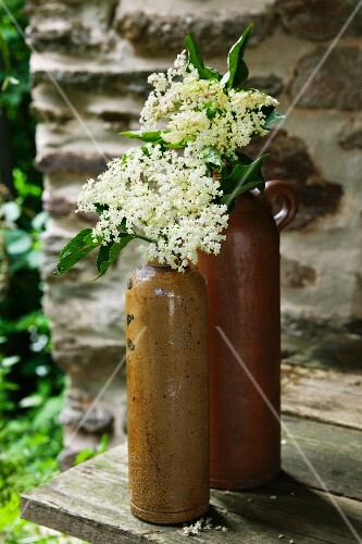 Elderflowers in old stoneware bottles on a wooden table in front of a stone wall in the garden