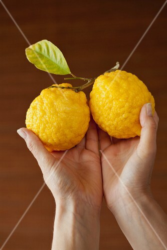 Hands holding two lemons